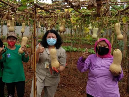 226 Kg Sayuran di Panen di Poktan Kampung Salo