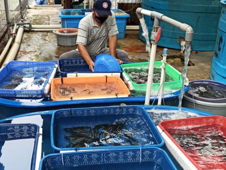 Fish Seeds Aid Distributed to Eight Fish Cultivator Groups in Thousand Islands