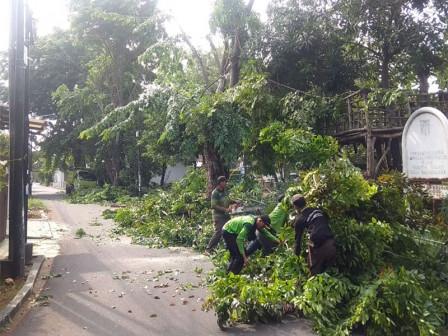 5,592 Trees Pruned in West Jakarta