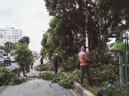 51,891 Trees Prone to Fall in East Jakarta Have Been Pruned
