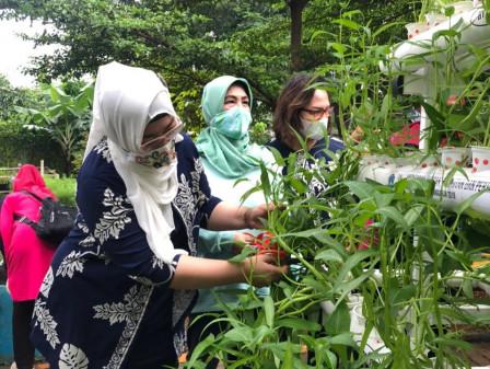 TP PKK Pancoran Memanen 12 Kilogram Sayuran di RPTRA Durian Tiga