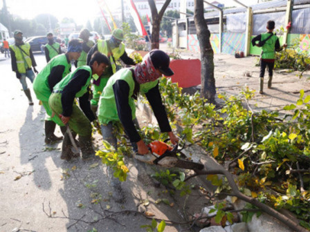 836 Trees Prone to Fall in West Jakarta Pruned