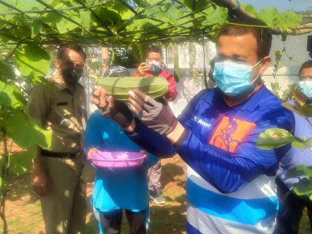 Wali Kota Jaktim Pimpin Panen Sayur di RPTRA Garuda Cilangkap