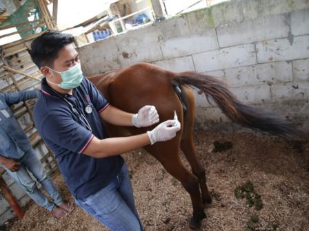 Animal Health Services Held in Tanah Merah