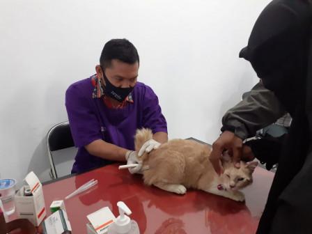 Sudin KPKP Kecamatan Tebet Berikan Layanan Kesehatan Pada 16 Kucing