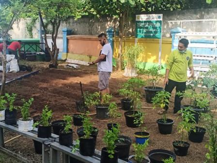 Tidung Island Develops Urban Farming in Tidung Ceria RPTRA