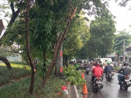 170 Pohon di Jl Kolonel Sugiono Ditoping
