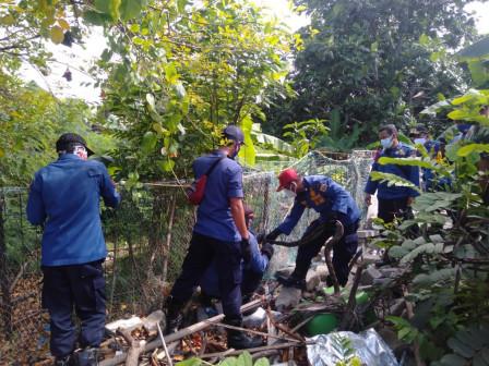Petugas Berhasil Evakuasi Ular Sanca di Pulau Lancang