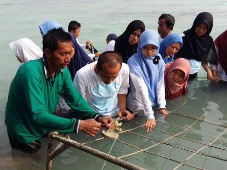 1.200 Bibit Terumbu Karang dan Mangove Ditanam di Pulau Tidung