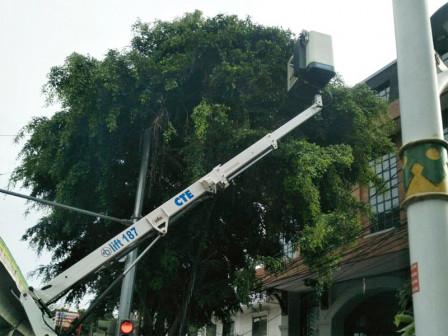 In a Week, 381 Trees in South Jakarta Pruned