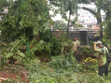 Sudin Pertamanan dan Hutan Kota Jakarta Barat Telah Memangkas 1.788 Pohon