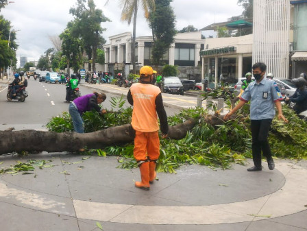 Falling Tree in Kemang Raya Crushes Car