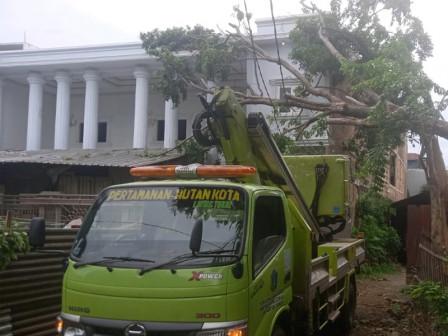 85 Trees in East Jakarta Pruned