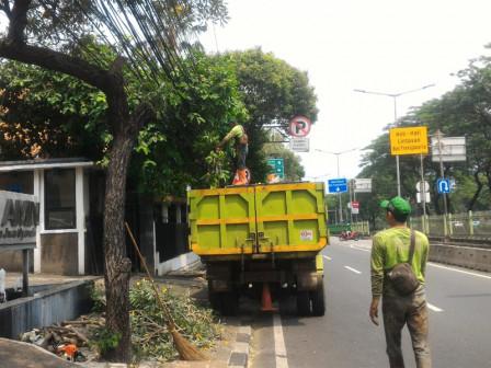 991 Pohon di Jakpus Sudah Dipangkas