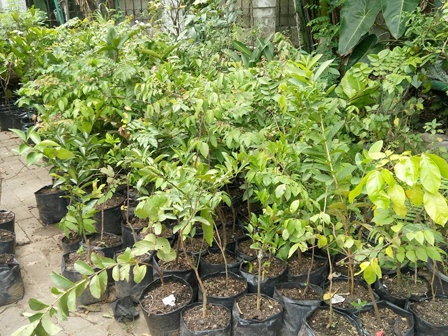 2,000 Ornamental Plants in Rawa Buaya Urban Forest Have Been Cultivated