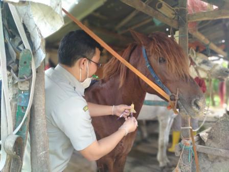 East Jakarta KPKP Checks 30 Delman Horses Health