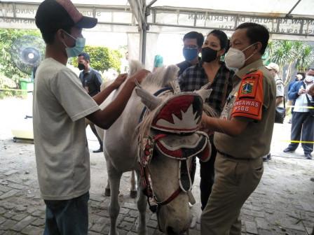 Puluhan Kusir Kuda Ikuti Workshop Perawatan Tapal Kuda Kuda di AEW Ragunan