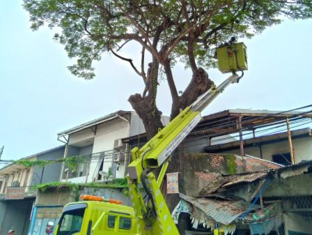899 Pohon di Jakarta Utara Telah Dilakukan Penanganan