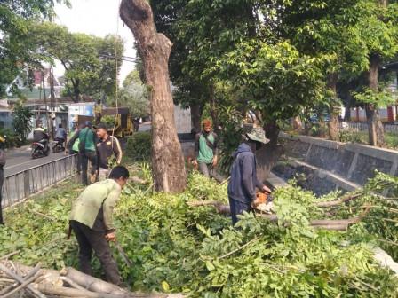 170 Pohon di Cipinang Ditoping