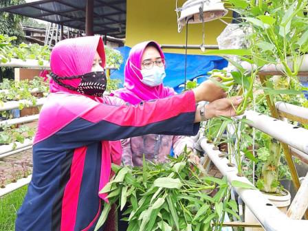 RPTRA Anggrek Bintaro Panen 8,5 Kilogram Sayuran