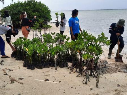 1.500 Bibit Mangrove Ditanam di Pulau Tidung Kecil