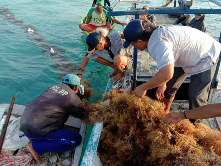 KPKP Sub-agency Gives Training to 114 Seaweed Cultivators