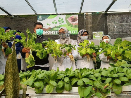 KPKP Agency Optimizes Pekarangan Pangan Lestari Program in 12 Urban Villages