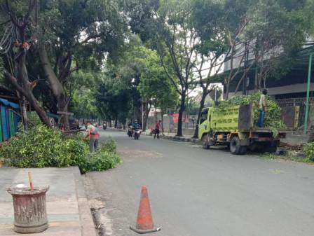 12 Pohon di Jl H. Naman Pondok Kelapa Ditoping