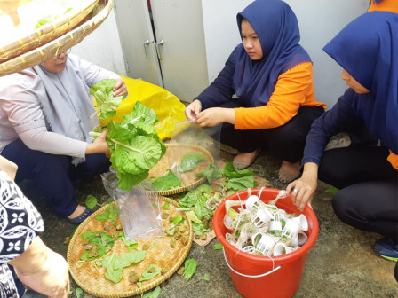18.7 Kg Samhong Harvested from CKTRP Office's Rooftop Garden