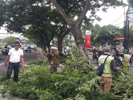 65 Trees in Central Jakarta Pruned