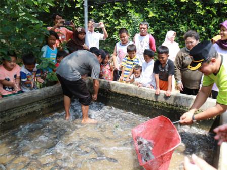 Farmed Fish at Taman Jangkrik RPTRA Ready for Harvesting