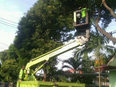 Sudin Pertamanan dan Hutan Kota Jaksel Pangkas 10 Pohon di Jl Darma Putra Jaya