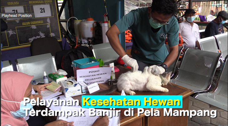 Pelayanan Kesehatan Hewan Terdampak Banjir di Pela Mampang