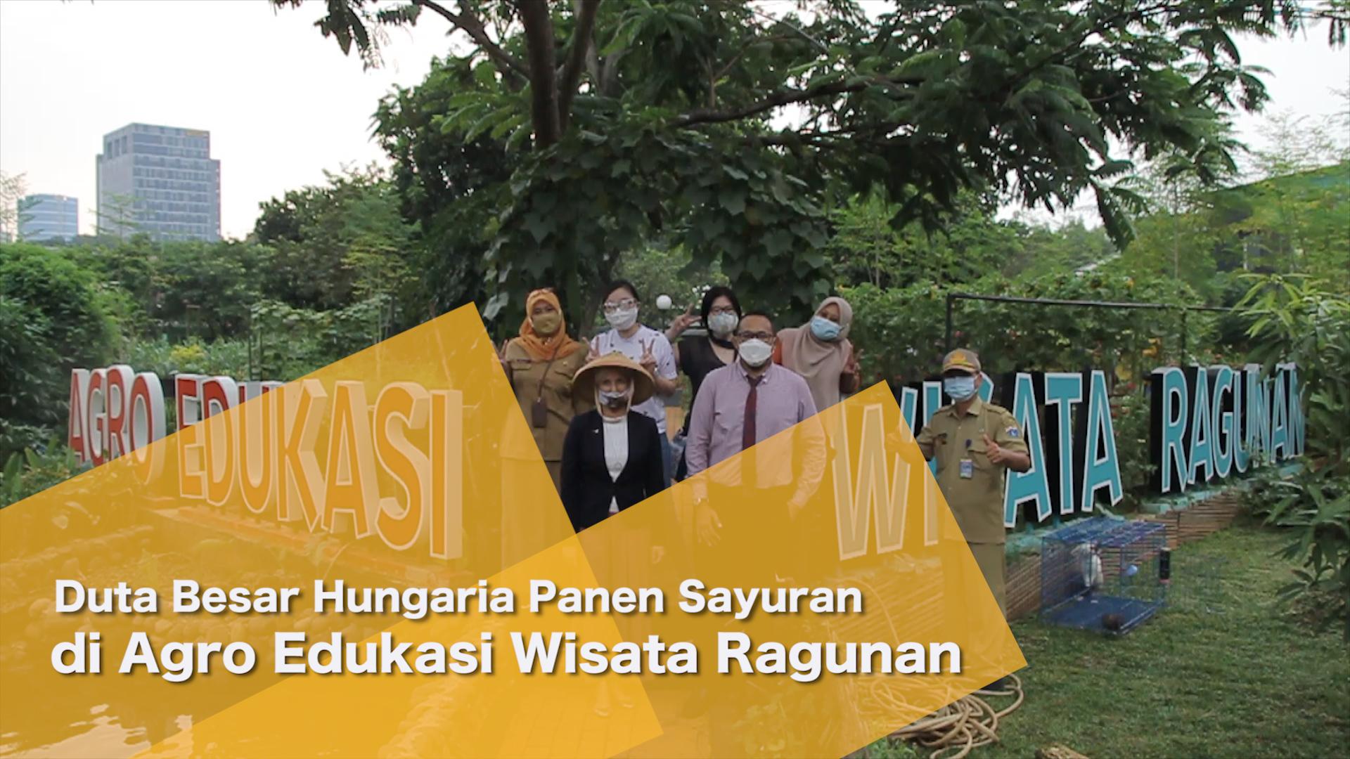 0706_aqil_Duta Besar Hungaria Panen Sayuran di Agro Edukasi Wisata Ragunan.mp4