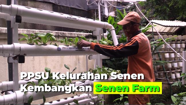 PPSU Kelurahan Senen Kembangkan Senen Farm