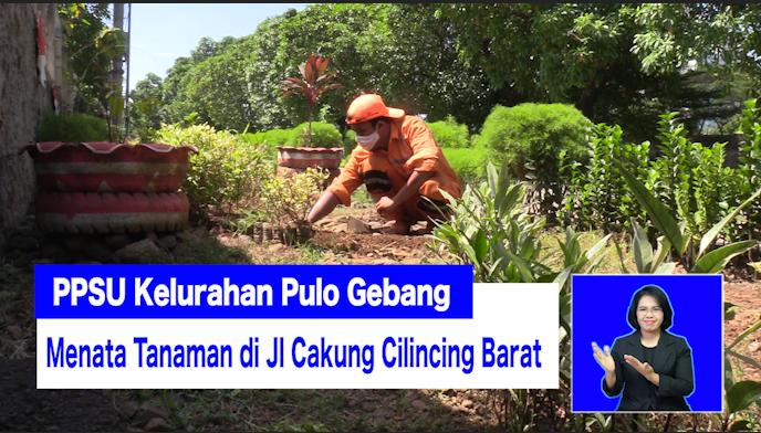 PPSU Kelurahan Pulo Gebang Menata Tanaman di Jl Cakung Cilincing Barat