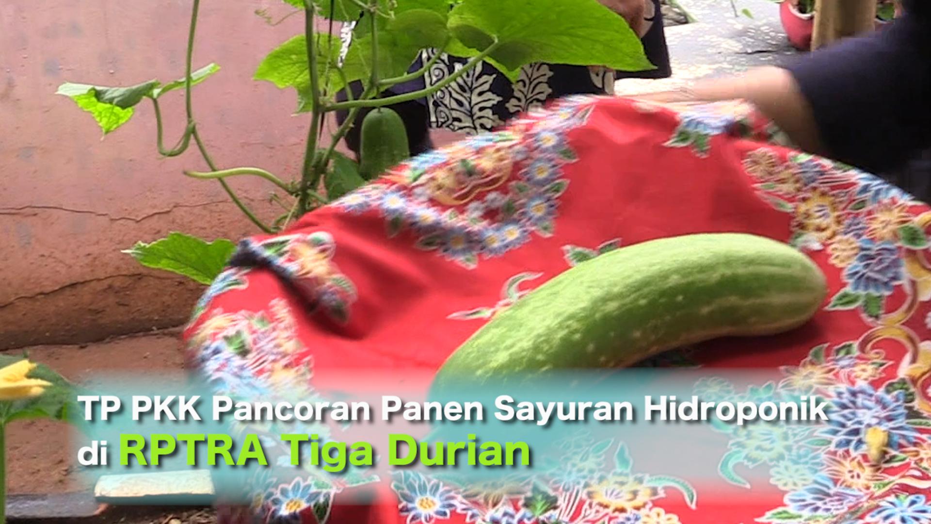 TP PKK Pancoran Panen Sayuran Hidroponik di RPTRA Tiga Durian