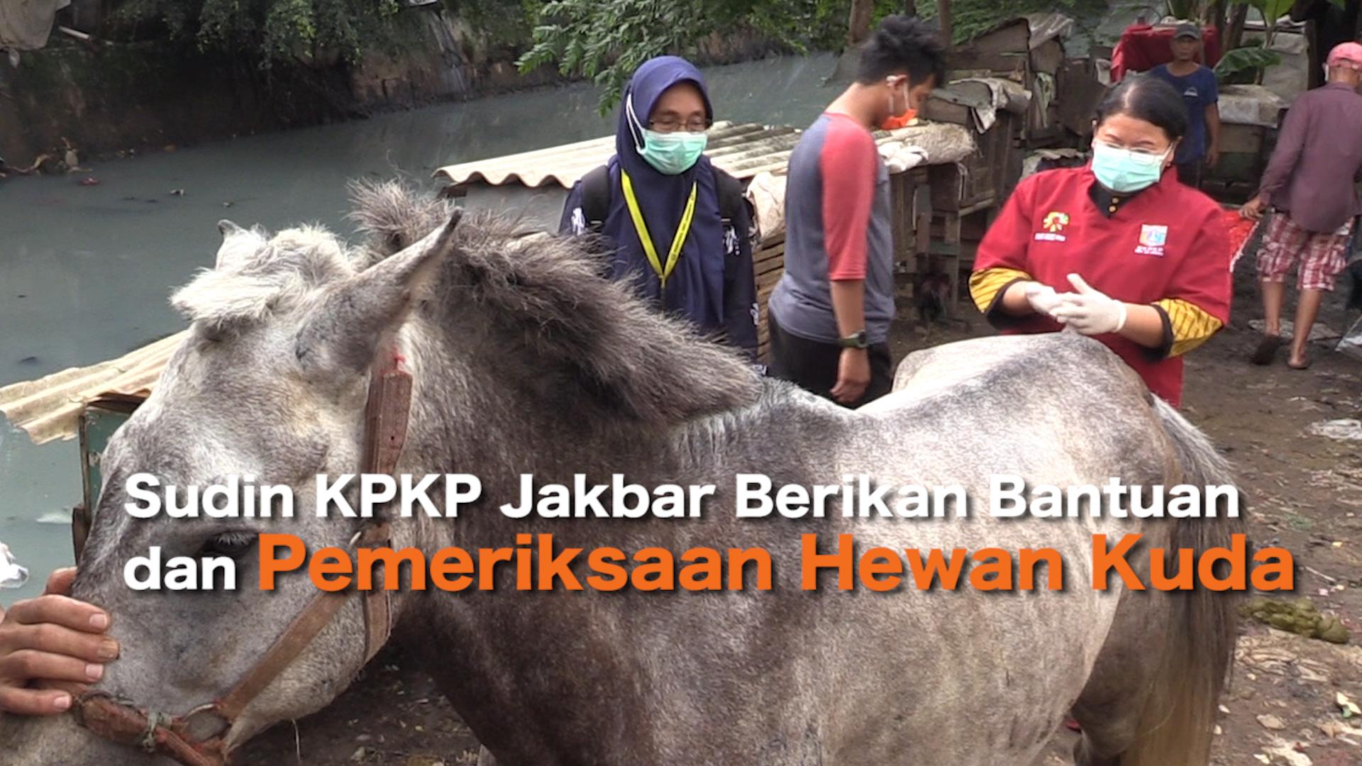 2502_aqil_Sudin KPKP Jakbar Berikan Bantuan dan Pemeriksaan Hewan Kuda .mp4